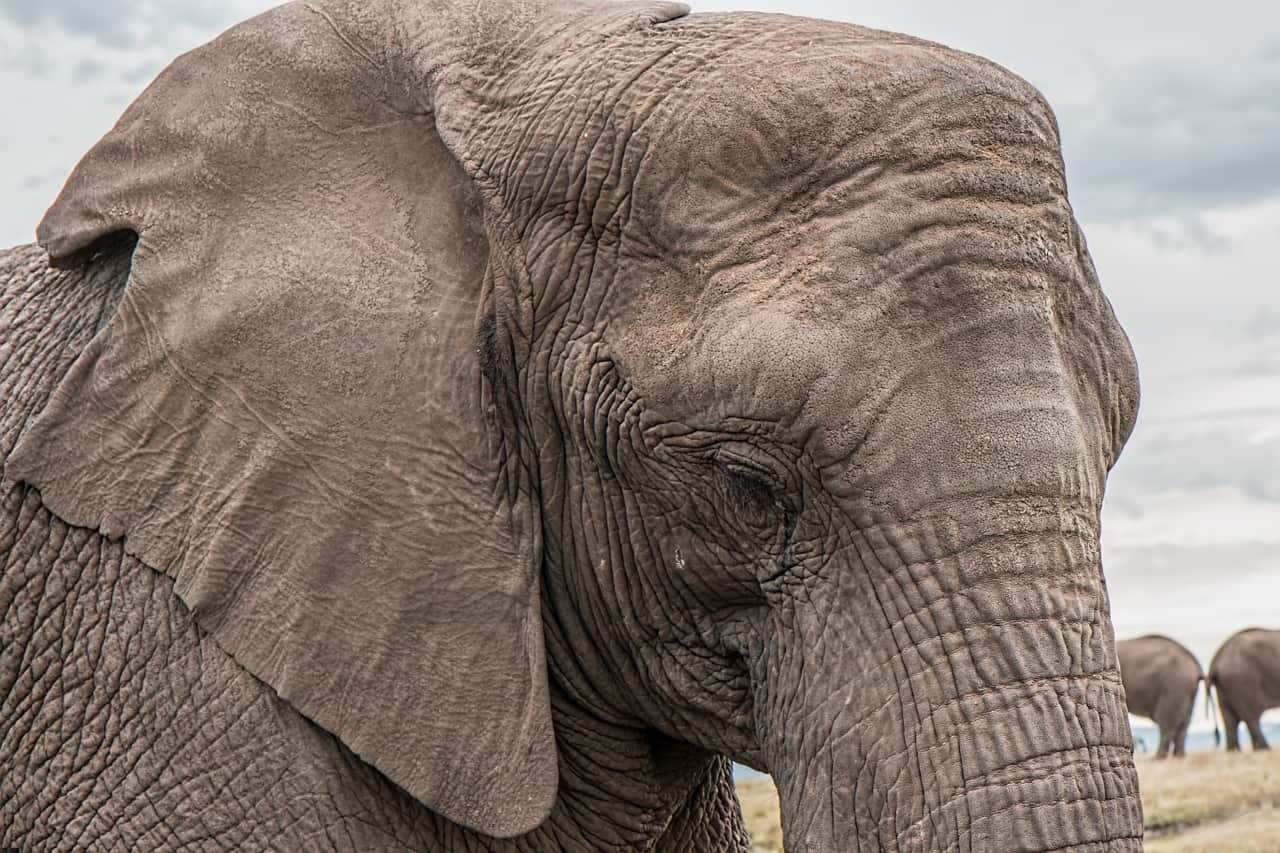 pentru memorie buna de elefant